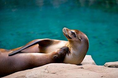 Cuddling seals.