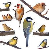 Fényképek madarak