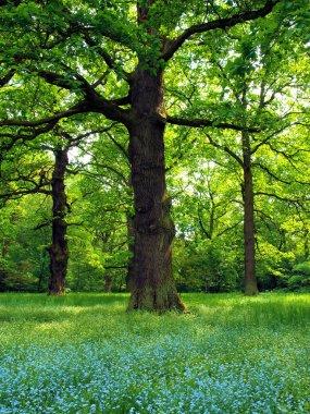 Magical oak trees