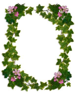 Ivy Border flowering clover