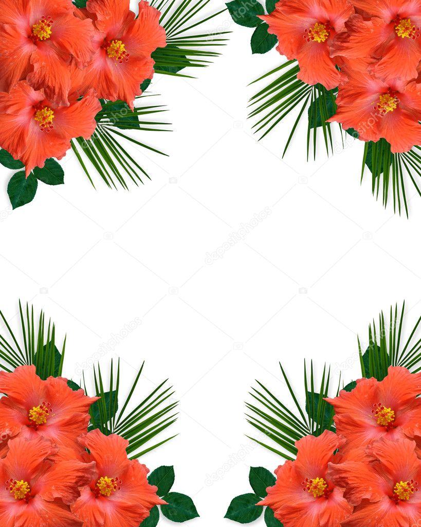 hibiscus tropical flowers border stock photo irisangel. Black Bedroom Furniture Sets. Home Design Ideas