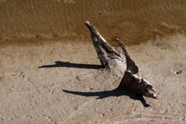 Bottom of a dry lake
