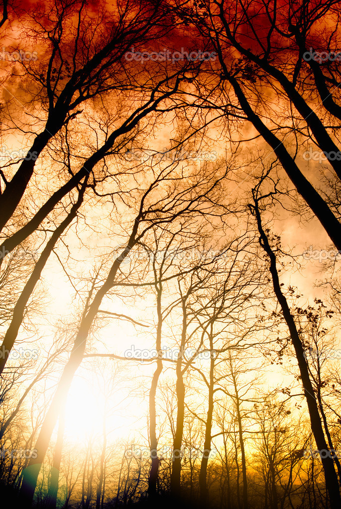 Фотообои Amazing summer sunset in forest. Sun ray