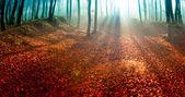 Fotografie úžasný letní západ slunce v lese