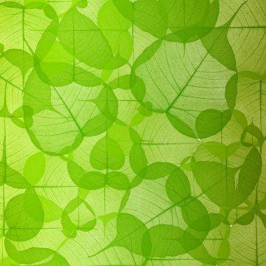 Leaf background green color