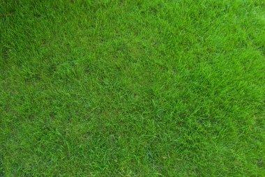 Real green grass texture