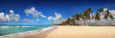 Tropical exotic beach, Punta cana stock vector