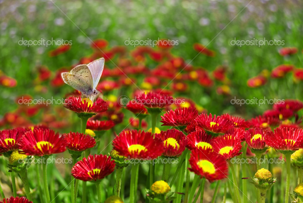 Butterfly on a red flower.