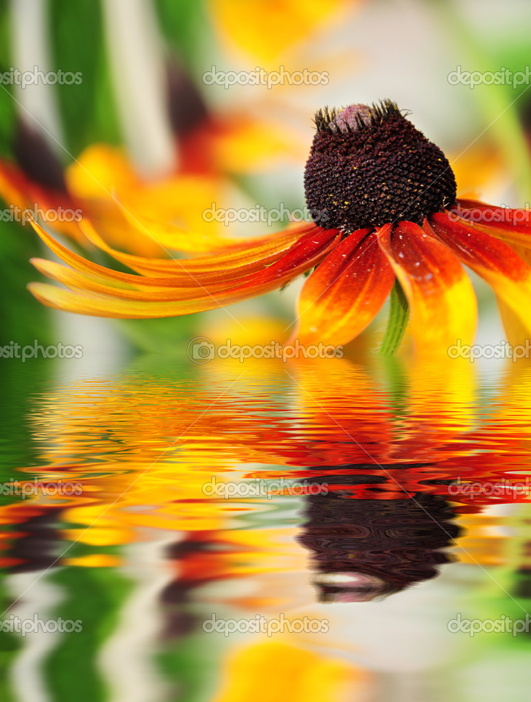 Orange flower reflected in the water