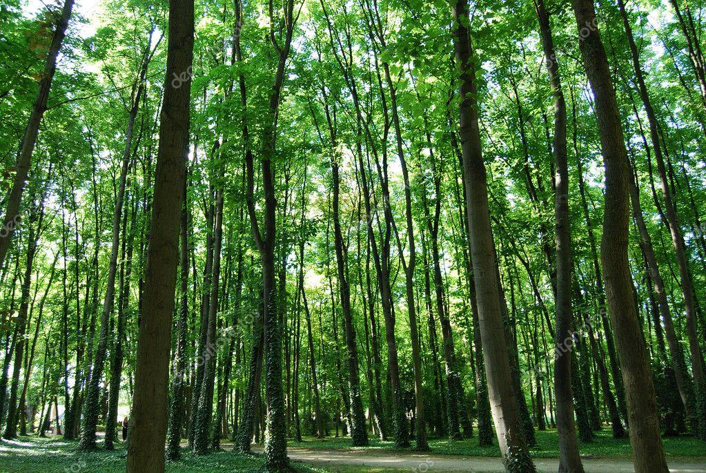 Sun lit trees in Saint Denis park