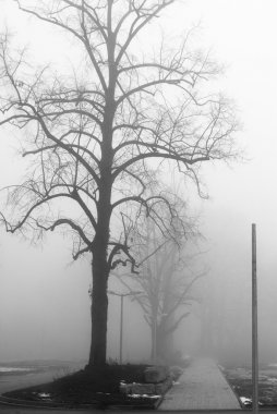 Foggy lane and bare trees