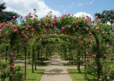 Roses pergola in a french garden stock vector
