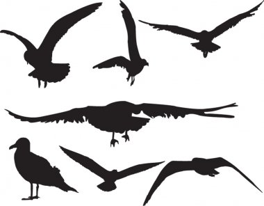 Sea gull collection