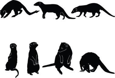 Meerkats collectin