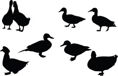 Ducks silhouette collection