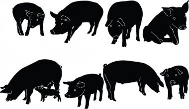 Pigs collection silhouette