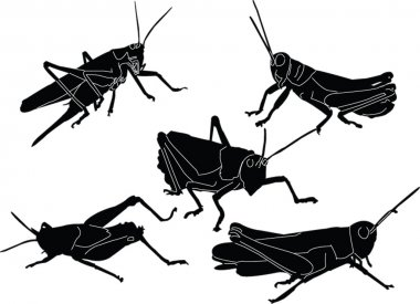 Grasshoppers collection