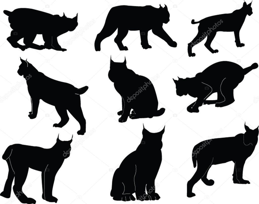 lynx stock vectors royalty free lynx illustrations depositphotos