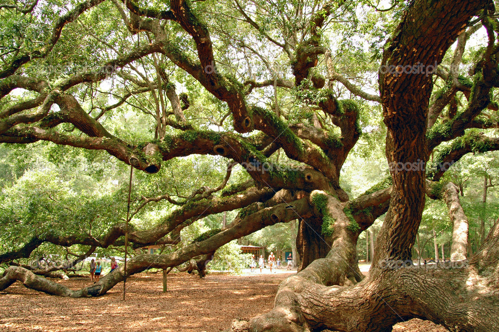Angel Oak near Charleston, SC