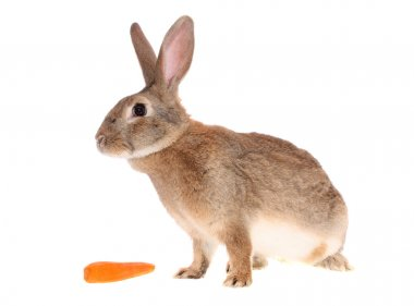 Rabbit with meal