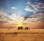 Fotografia elefante