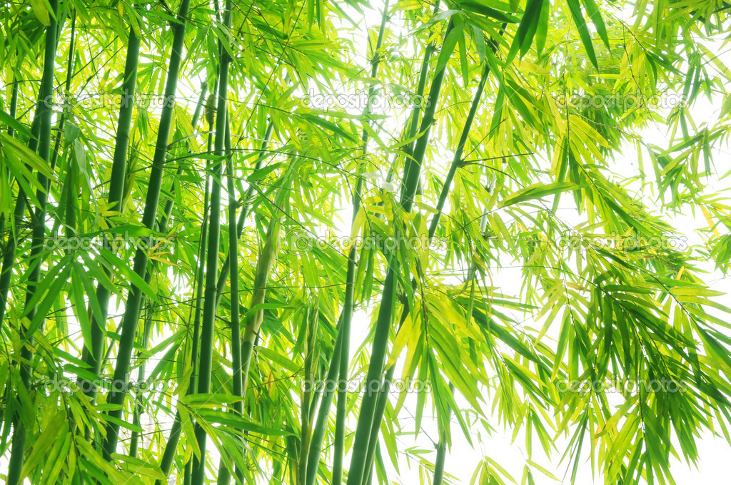 Verdure flourish bamboo background