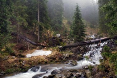 The mountain river in Carpathians