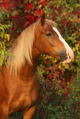 Horse in the autumn garden