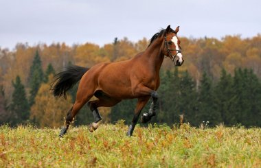 Horse in the autumn field