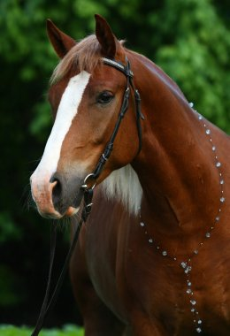 Horse with a necklace