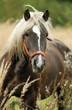 Horse in the autumn meadow