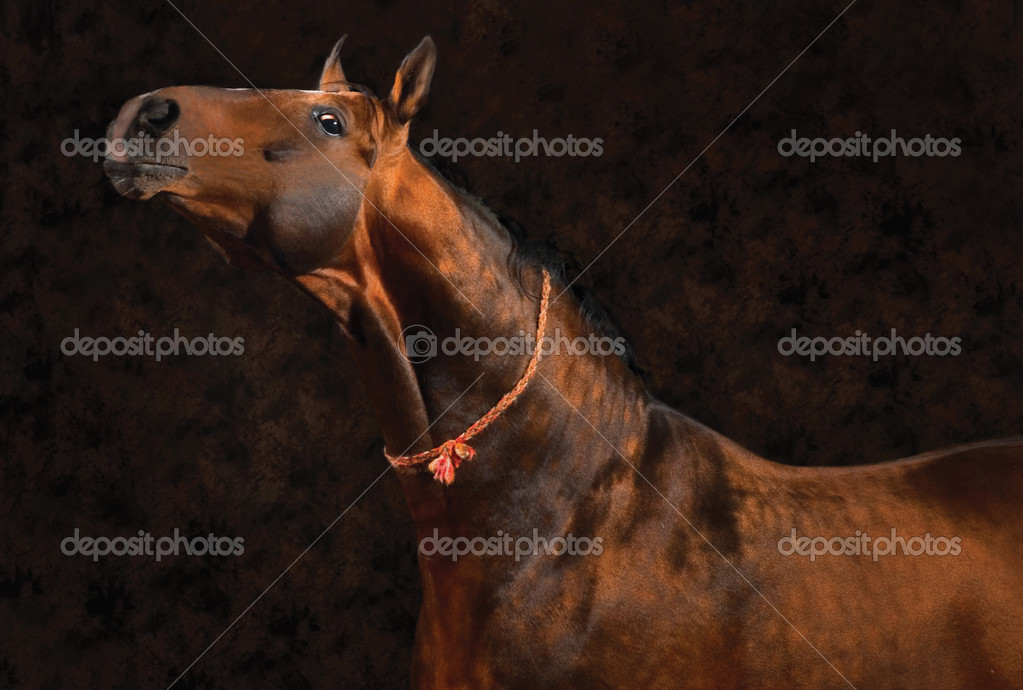 Buckskin horse on brown background
