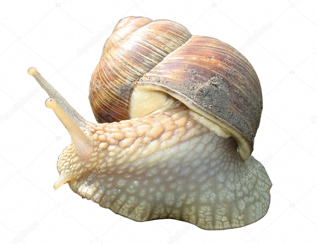 ten little garden snails Amazing facts about snails only a very little part of them is edible or a garden it has been the goal of this homepage for ten years to acquaint you.