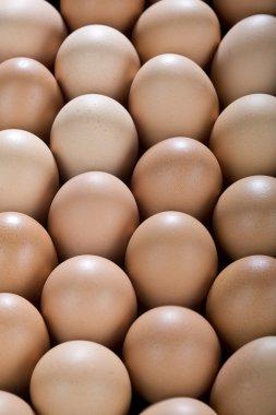 Eggs Backgroud.