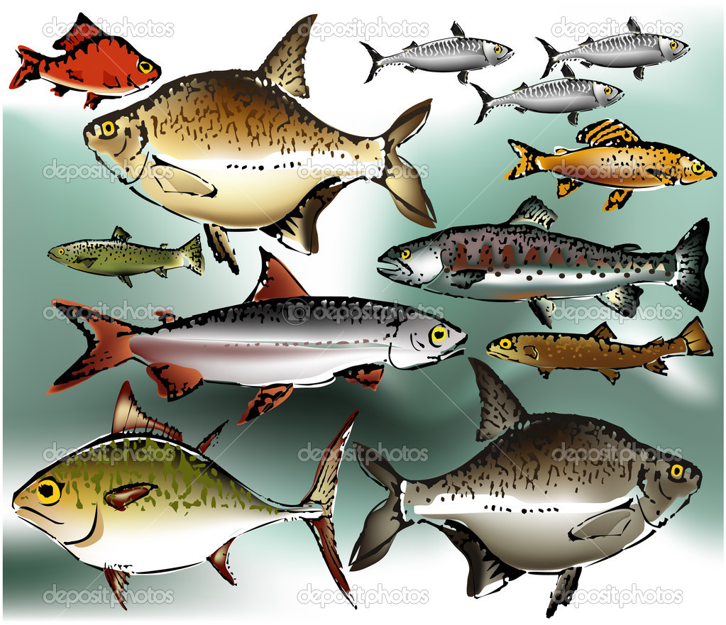 Fish collection, vector illustration
