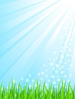 Green grass under sunrays