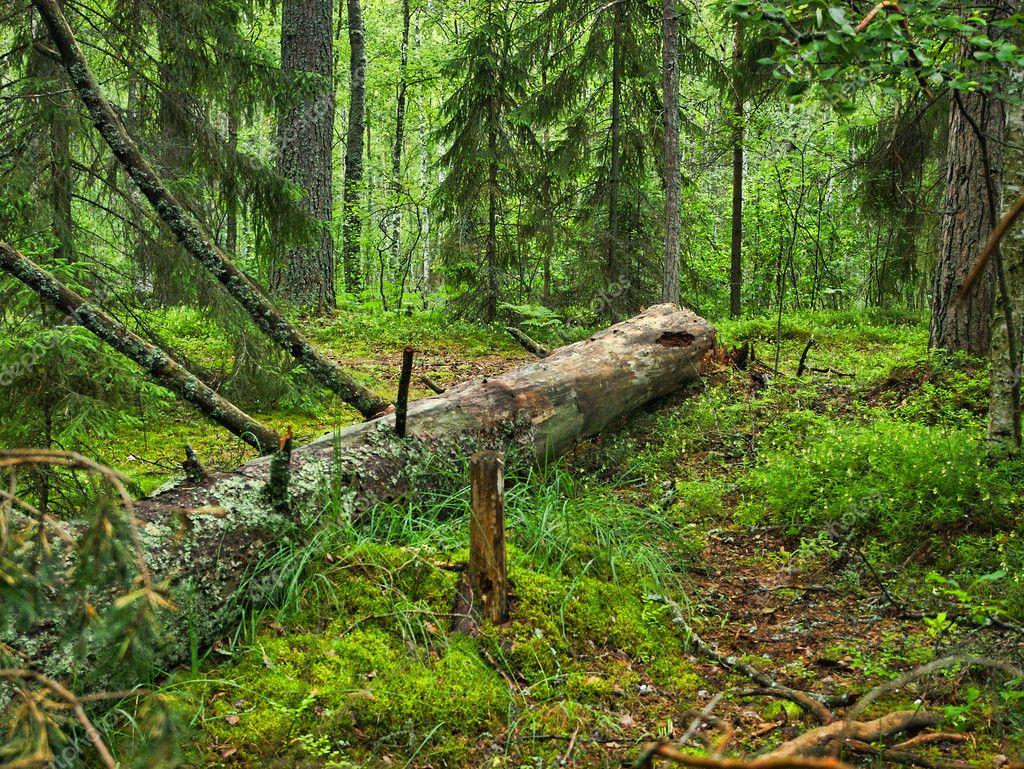 лежащее дерево картинки выбрать