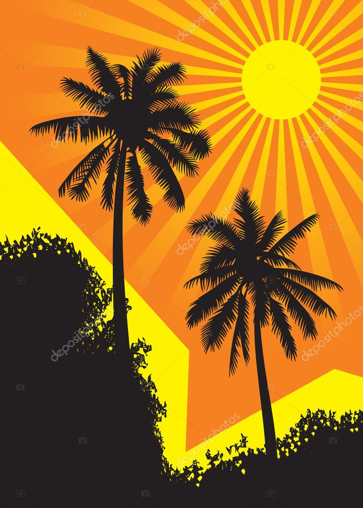Sunlit palm trees