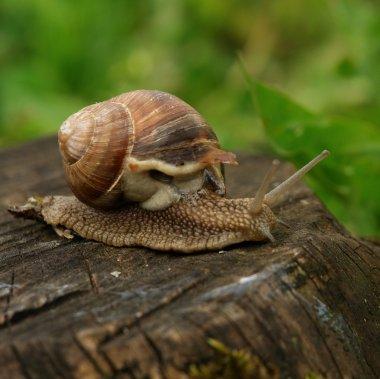 Snail on a mission
