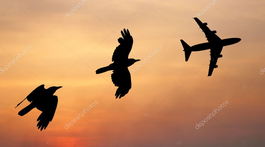 Bird and plane flying black silhouette