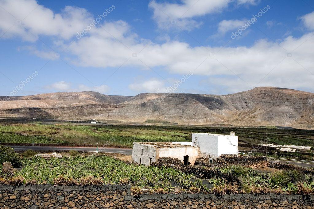 Cactus farm in Lanzarote