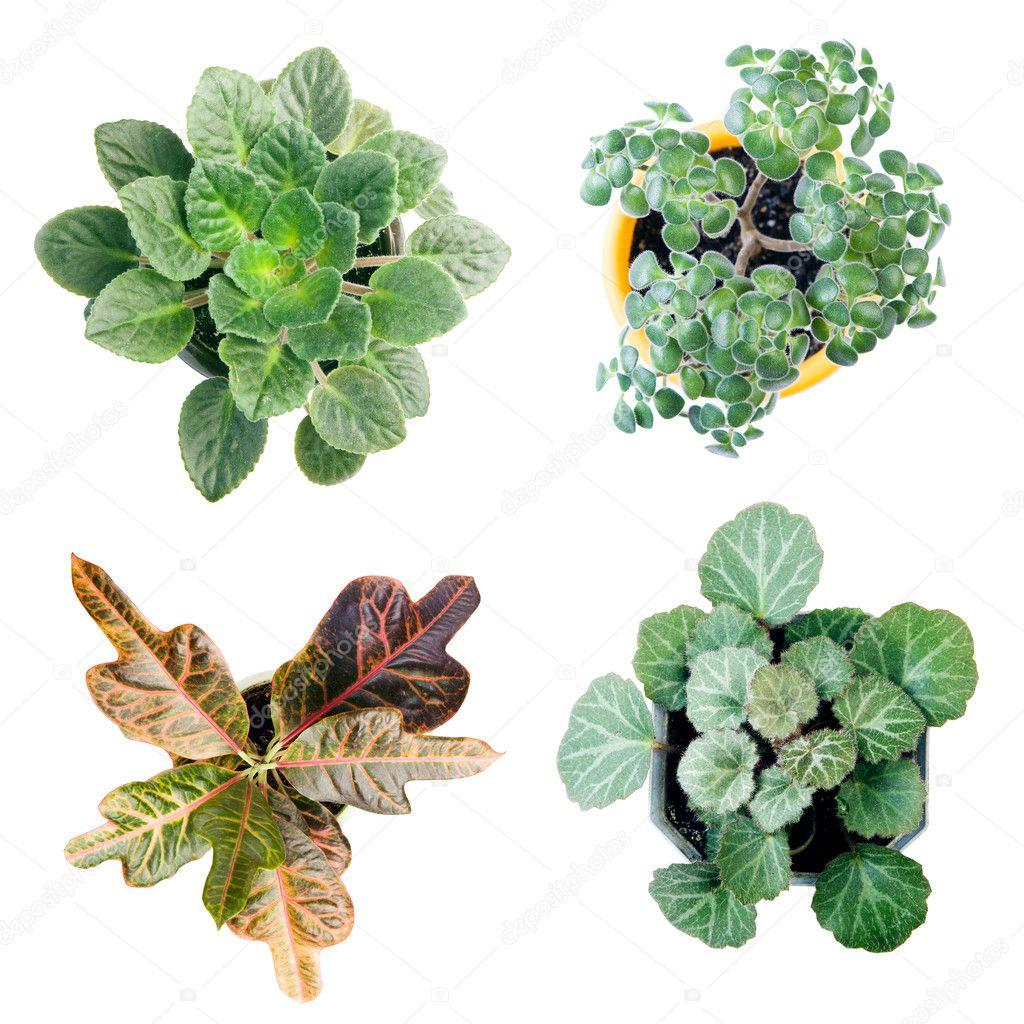 4 plant