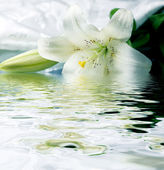 Photo White lily reflected in the water