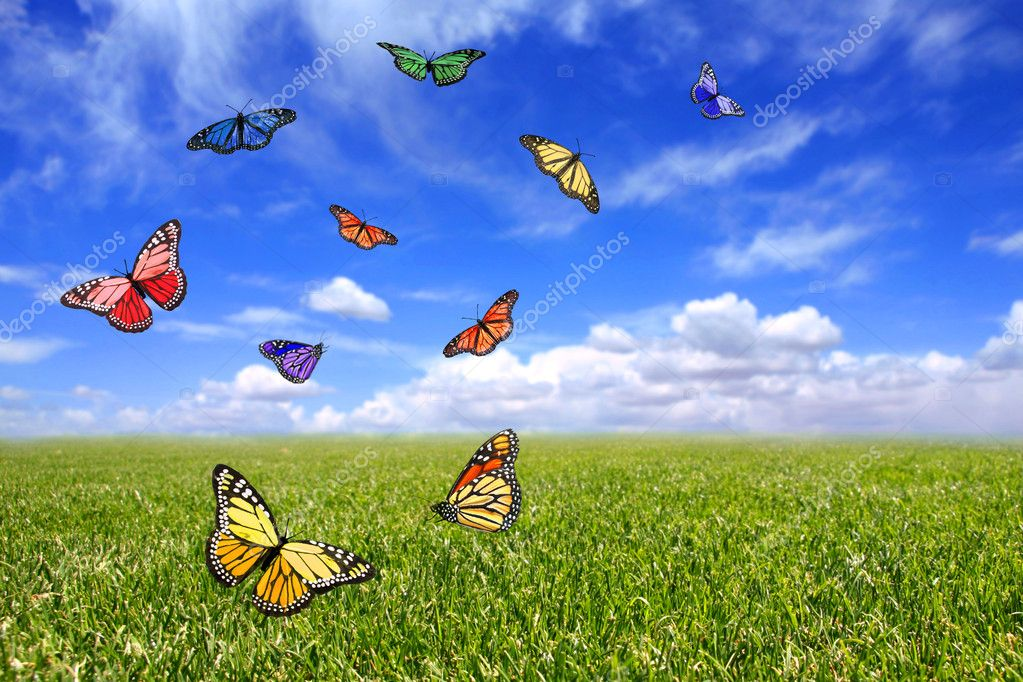 Beautiful Butterflies Flying Free in an