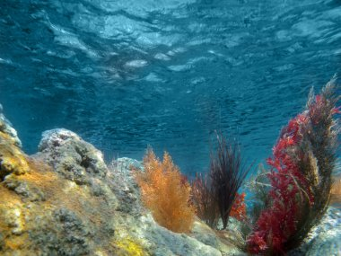 Underwater View of the Ocean With Plants