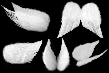 Many Angles of Guardian Angel Wings Isol