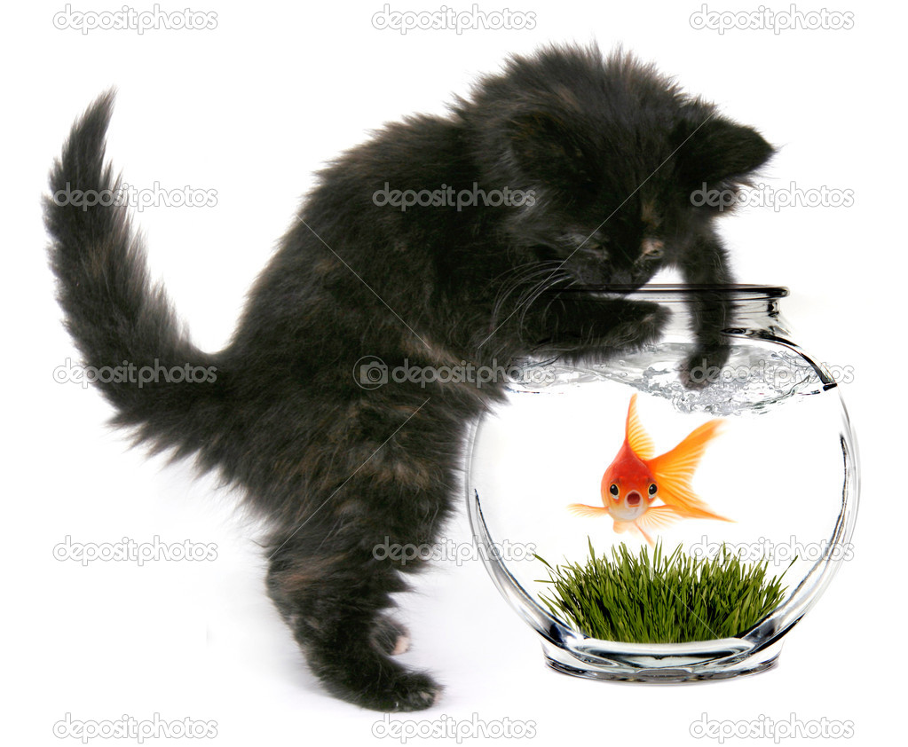Scared Goldfish That Will Soon Be Eaten