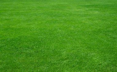 Green grass background stock vector