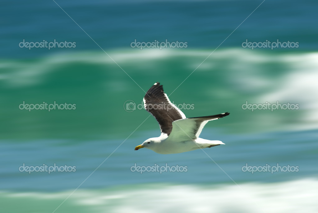Seagull flying over waves