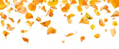 Panoramic Autumn Leaves